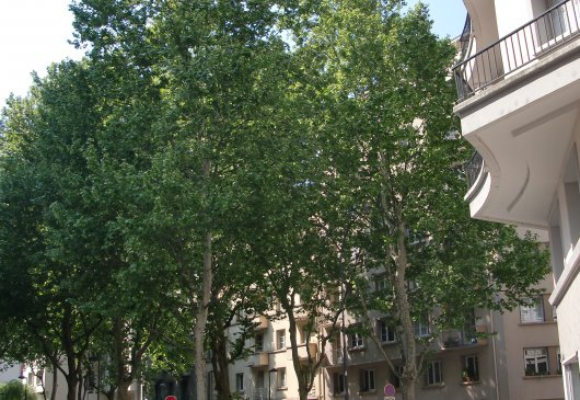 Location meubl e d 39 appartement meylan for Location meublee grenoble